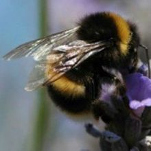 Pesticide Problems for Bees