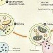 How Autophagy Works