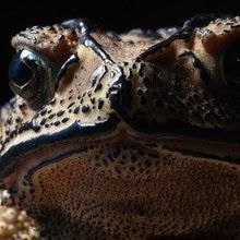 Image of the Day: That Toad Is Poison