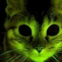 Fluorescent Cats Aid Research