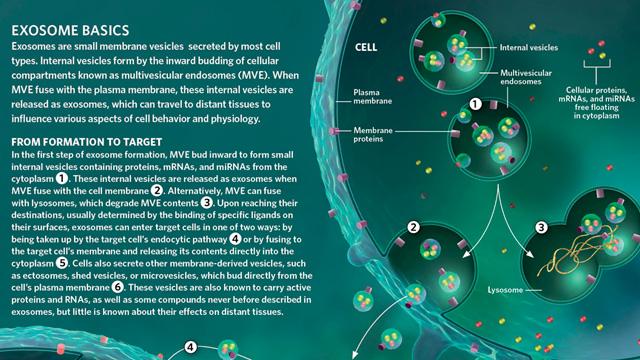 exosome basics