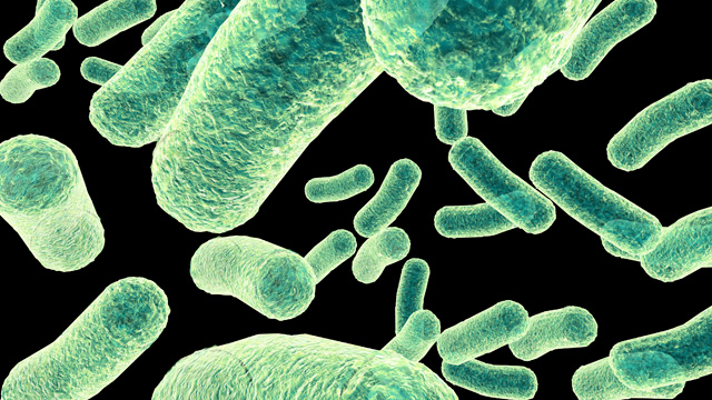 if bacteria can do it the scientist magazine