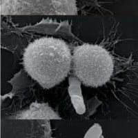 Stem Cell Funnies