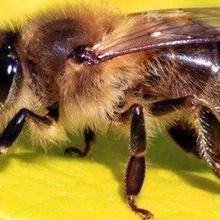 Bees Appear Able to Comprehend the Concept of Zero