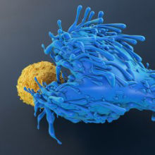"""Public"" T-Cell Receptors From Resistant People Fend Off HIV"