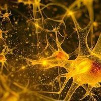 Dopamine Neuron Implants Ease Parkinson's Symptoms in Monkeys
