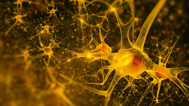 Dopamine Neuron Implants Ease Parkinson's Symptoms in