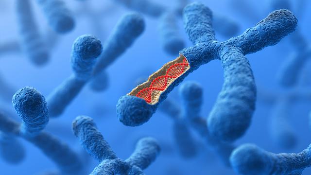 Image result for genes
