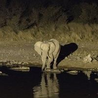 Humans are Making Mammals Return to the Night Life