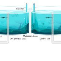 Infographic: Ocean Mesocosms