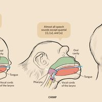 Primer: Acoustics and Physiology of Human Speech