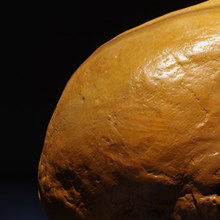 """Minibrains"" May Soon Include Neanderthal DNA"