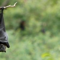 Nipah Virus Kills 10 in India