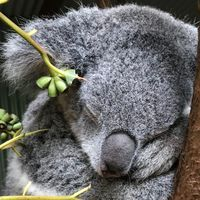Image of the Day: Koala Code