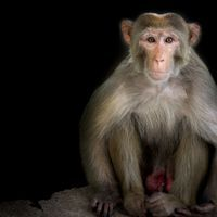 Gene Editing Reduces Monkeys' Cholesterol