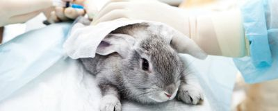 Software-Based Chemical Screen Could Minimize Animal Testing