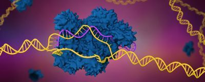 CRISPR Gene Editing Deletes, Shuffles More Genes than Intended
