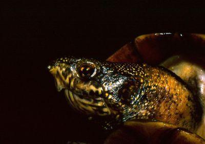 Herpetologists' League Revokes Distinguished Herpetologist Award