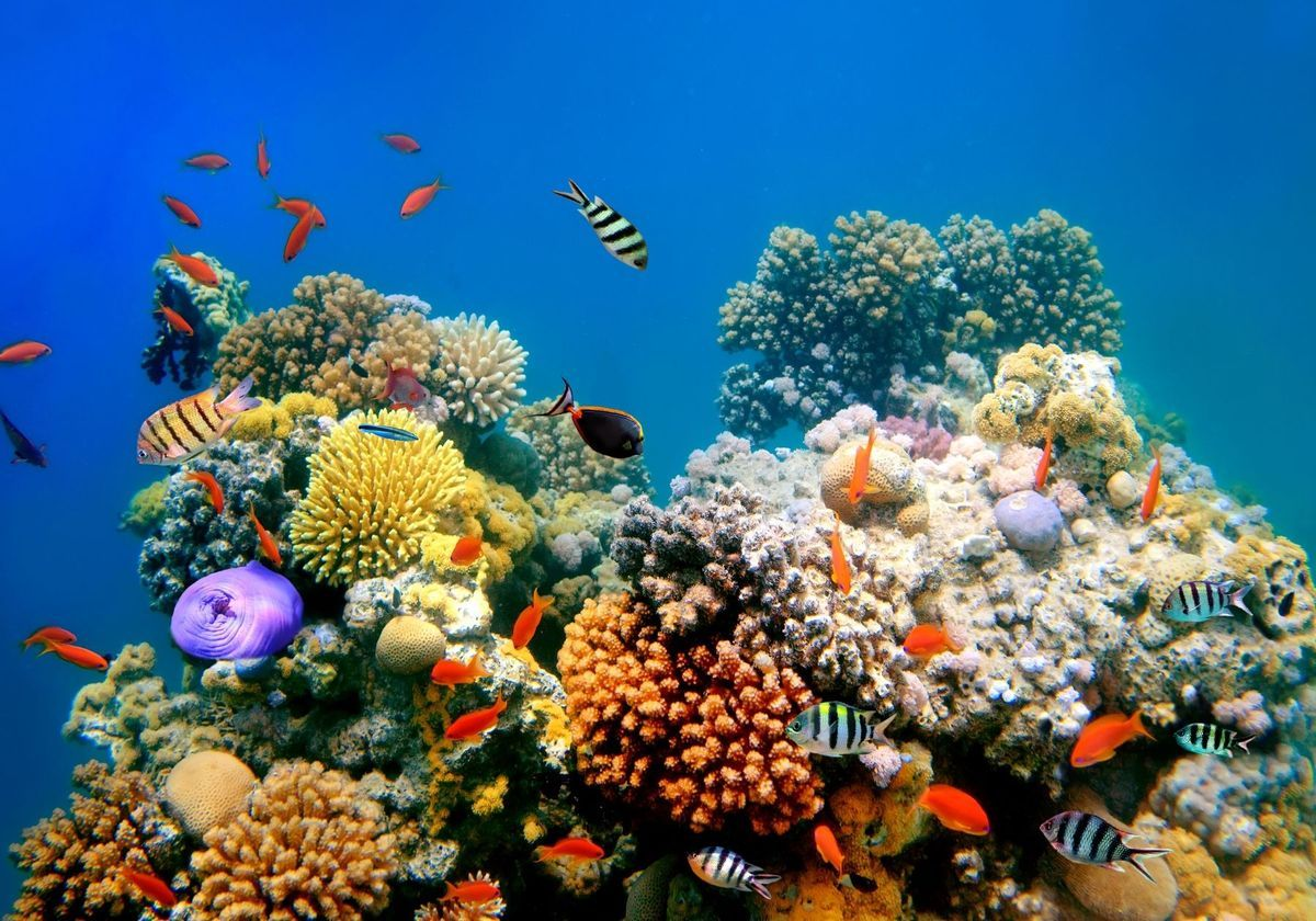 Deepwater Coral Reefs Unlikely to Welcome Shallow-Water Animals ...