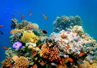 deepwater coral reefs unlikely to welcome shallow water animals