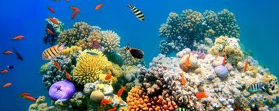 Deepwater Coral Reefs Unlikely to Welcome Shallow-Water Animals