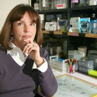 Endocrinologist Ann Nardulli Dies