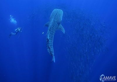 Image of the Day: Deep Blue Sea