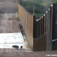 Border Wall Will Deliver A Huge Blow To Biodiversity