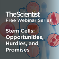 Stem Cells: Opportunities, Hurdles, and Promises