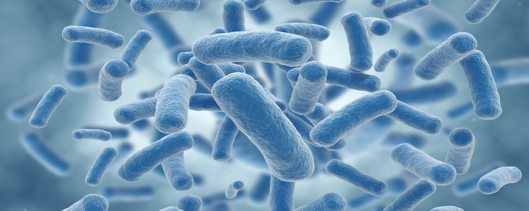 Synthetic Bacteria Help Treat Phenylketonuria in Mice