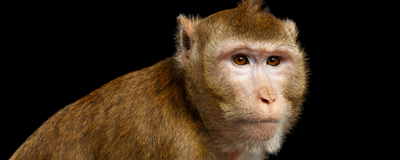 As Primate Research Drops in Europe, Overseas Options Appeal
