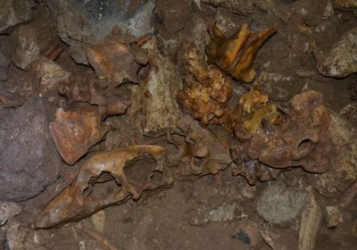 Image of the Day: Bear Bones