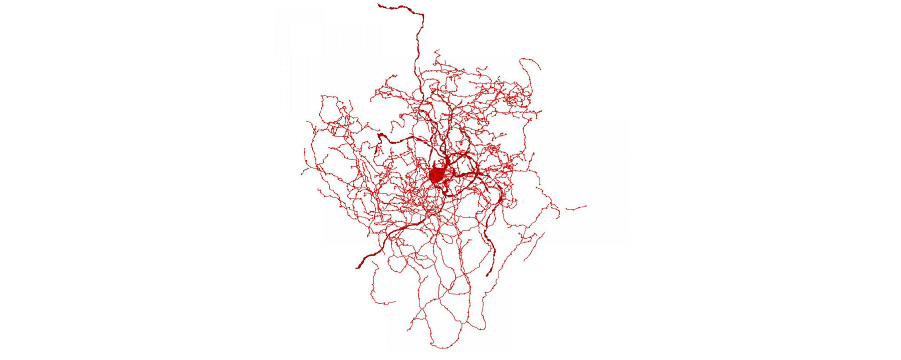 New Cell Type Discovered in Human Brains