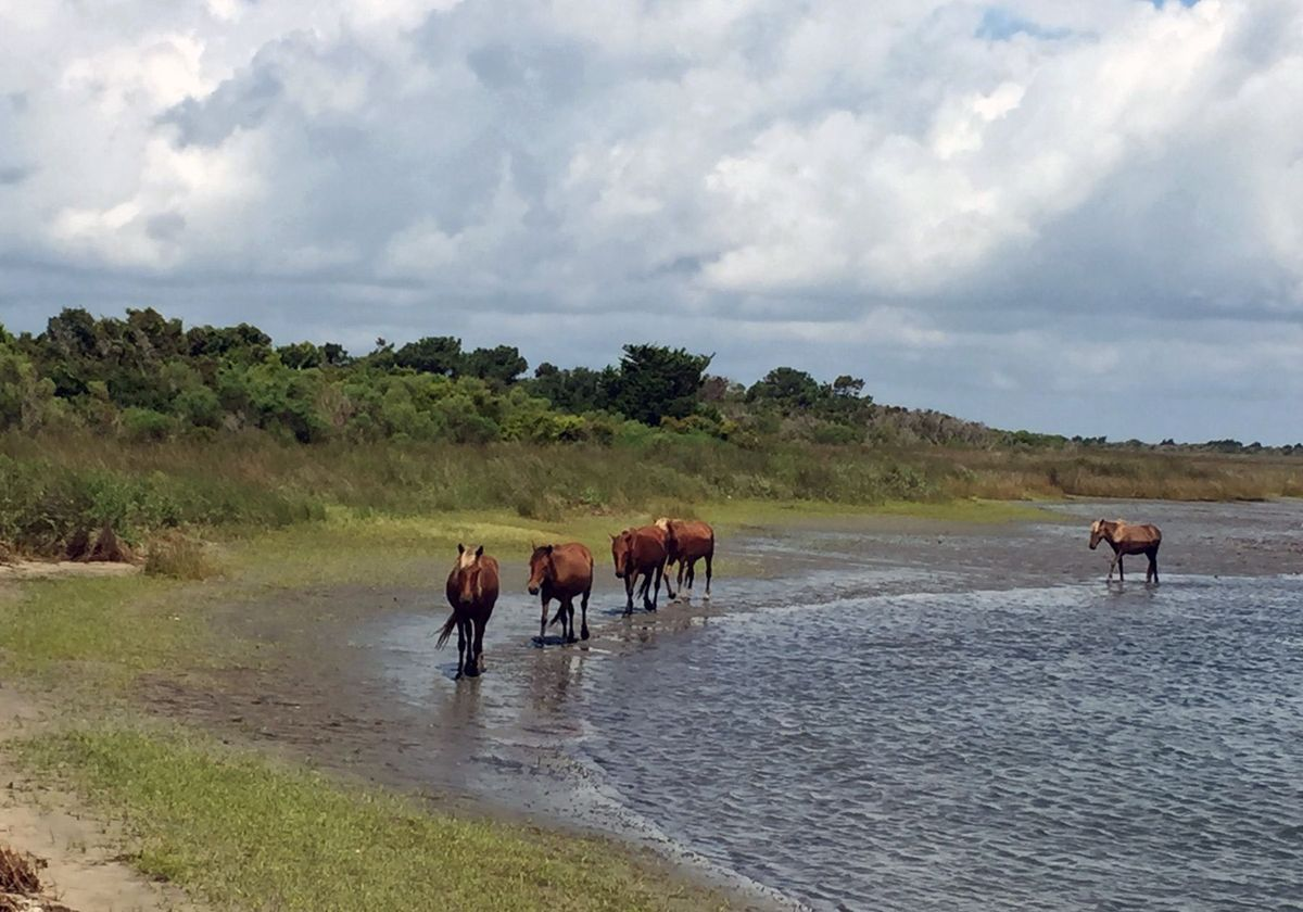 Wild Horses of the Atlantic Coast Hoofprints In The Sand