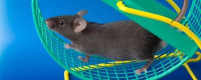 Limited Meal Times Prevent Obesity in Mice Prone to Gaining Weight