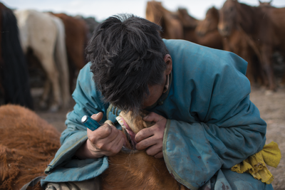 Ancient Teeth Tell the History of Equine Dentistry