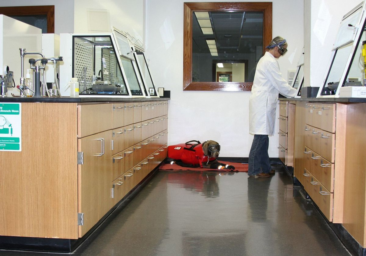 The Challenges of Bringing Service Dogs into the Lab | The Scientist Magazine®