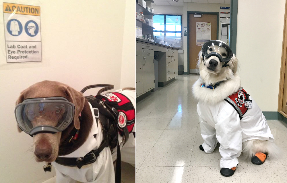 The Challenges of Bringing Service Dogs into the Lab | The