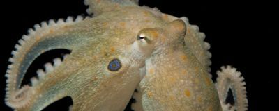Octopuses On Ecstasy Reveal Commonalities with Humans