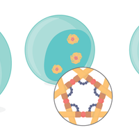 Infographic: Effects of Satellite DNA–Binding Proteins