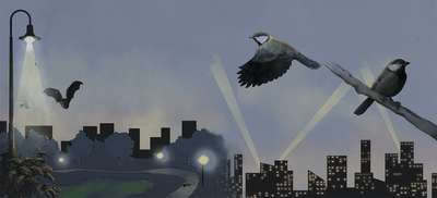 Infographic: Light Pollution Threatens Species
