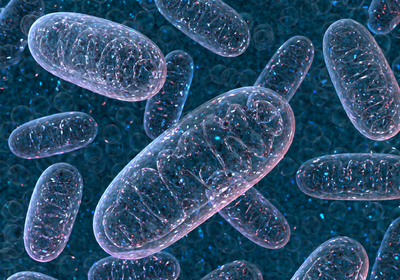 Gene Editing Treats Mitochondrial Disorders in Mice