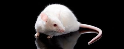 CRISPR Editing Heads Off Disease in Mouse Livers