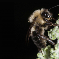 Bees Stopped Buzzing During the 2017 Eclipse