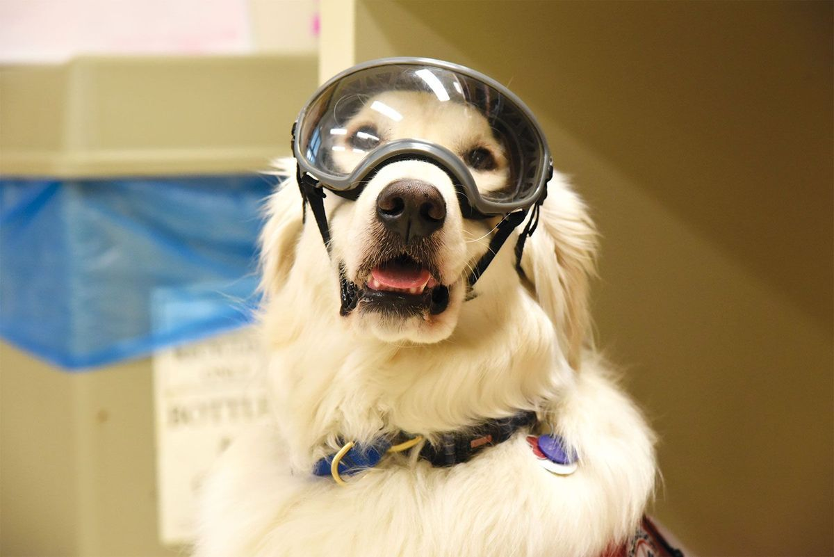 Service Dogs Be Admitted Into The Lab
