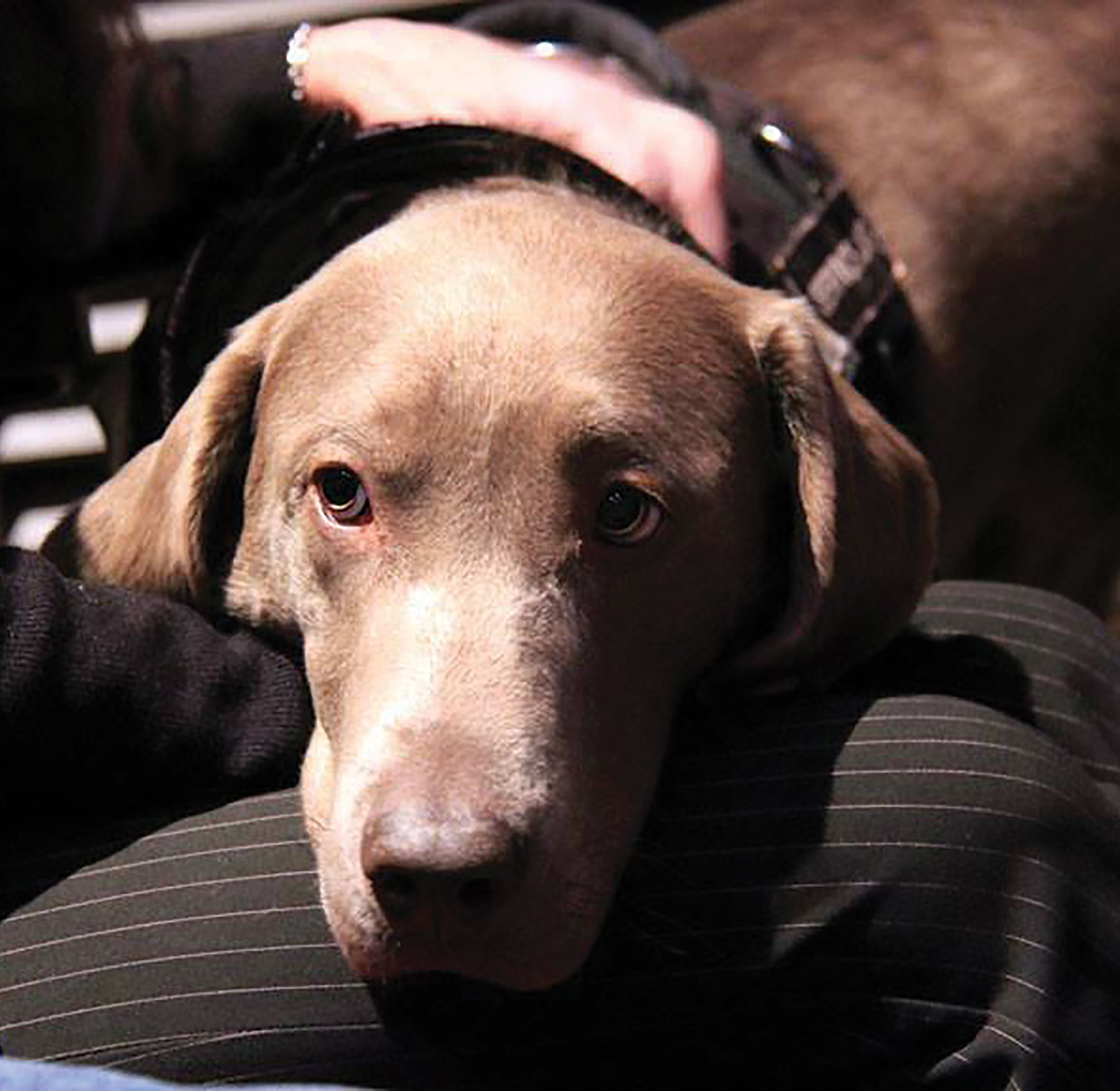When Should Service Dogs Be Admitted into the Lab? | The Scientist