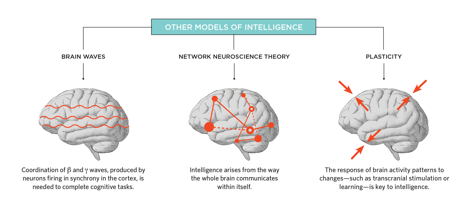 The Biological Roots of Intelligence | The Scientist Magazine®