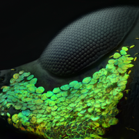 Image of the Day: Weevil Eye