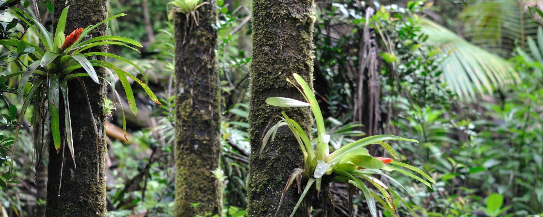 Huge Arthropod Declines Documented in Puerto Rican Rainforest