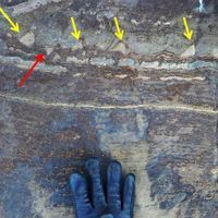 Signs of Ancient Microbial Life Questioned